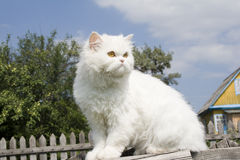 Cat in country Stock Photos