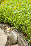 A cat in countryside Stock Photography
