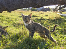 Cat in the countryside Stock Photography