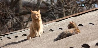 Cat Couple Royalty Free Stock Photography