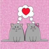 Cat couple Stock Photos