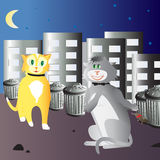 Cat couple Stock Images