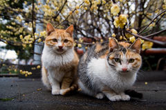 Cat_couple Royalty-vrije Stock Foto