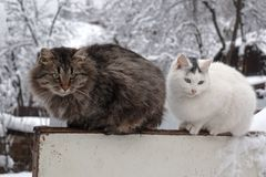 Cat couple sitting on the fence in the winter garden stock image