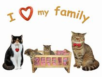 Cat couple with their kittens in a cradle 2. The wooden cradle with kittens is between their cat parents. I love my family. White background. Isolated royalty free stock photos