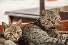 Cat couple Stock Photo