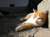 Cat in a Courtyard. A cat rests in a courtyard of Ciudad Rodrigo, Spain Stock Photo