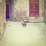 Cat in the Courtyard Royalty Free Stock Images