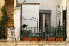 Cat in a courtyard of old houses in the center of Lecce, Salento - Italy. Cat in a courtyard of old houses in the center of Lecce in Piazza Duomo, Salento Royalty Free Stock Photo