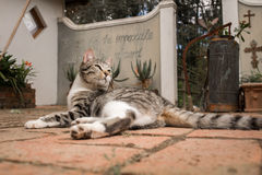 Cat in Courtyard Royalty Free Stock Photography