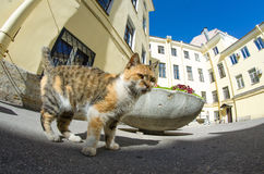 Cat in courtyards ordinary St. Petersburg. Sky Royalty Free Stock Photos