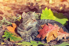 Cat covered with leaves Royalty Free Stock Photography