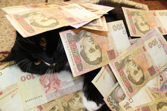 Cat covered with Ukrainian money Stock Photos