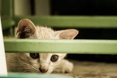 Cat Coward. At little coward hiding behind a chair Stock Photos