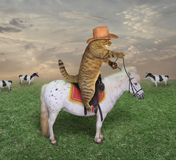 Cat cowboy grazes his cows 2 royalty free stock photography
