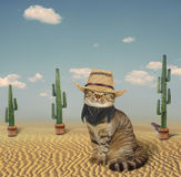 Cat cowboy in the prairie Stock Image