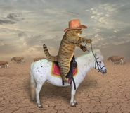 Cat cowboy on a horse 2 stock photography