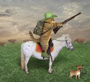 Cat cowboy with a rifle on the ranch. The cat cowboy with a rifle rides a horse on the ranch. His dog is next to him stock image