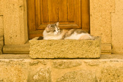 Cat in cradle. Cat resting in stone cradle in St Charles, Provence, France during Fall stock photography