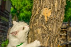 The cat is crawling on a tree royalty free stock photo