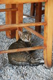Cat. From Crete, Greece island Stock Images