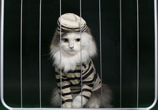 Cat criminal behind bars Royalty Free Stock Photography