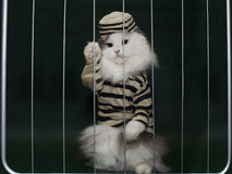 Cat criminal behind bars Stock Photos