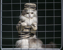 Cat criminal behind bars Royalty Free Stock Image