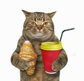 Cat with croissant and cappuccino royalty free stock photos