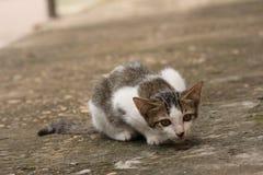 Cat crouch on floor. Kitty, Cat crouch on floor Stock Photo