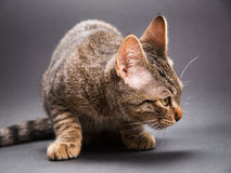 Cat crouched and looking aside Stock Photo