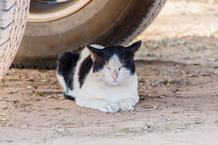 The cat crouched under cars. Royalty Free Stock Photo