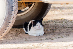 The cat crouched under cars. Stock Photos