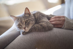 Cat cuddling Royalty Free Stock Images