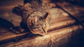 Cat. Cunning cat to hunt ducks Stock Image