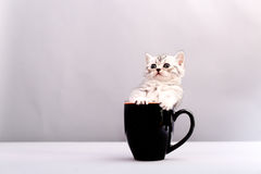 Cat in a cup Stock Images