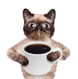 Cat with a cup of coffee. Royalty Free Stock Images