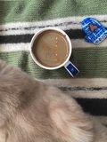 Cat and cup of coffee on the woolen blanket royalty free stock photo