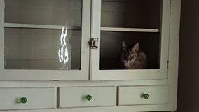 Cat in the Cupboard Royalty Free Stock Photos