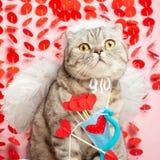 Cat Cupid ängel, med pilbågar och pilar på en rosa bakgrund fotografering för bildbyråer