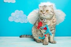 Cat Cupid, Engel op een blauwe achtergrond met wolken en ruimte voor de ontwerper royalty-vrije stock fotografie
