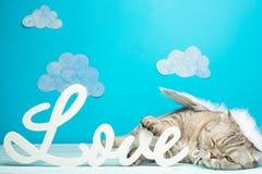 Cat Cupid, leuk engelenconcept de Dag van Valentine, met de inschrijvingsliefde royalty-vrije stock afbeelding