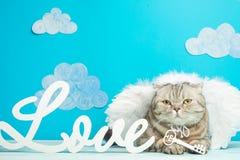 Cat Cupid, leuk engelenconcept de Dag van Valentine, met de inschrijvingsliefde stock foto
