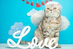 Cat Cupid, leuke engel met boog en pijlen, Concept de Dag van Valentine royalty-vrije stock afbeeldingen