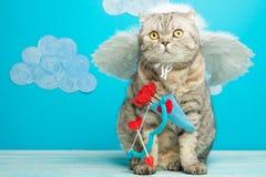 Cat Cupid, leuke engel met boog en pijlen, Concept de Dag van Valentine, met ruimte voor een inschrijving of een ontwerp royalty-vrije stock foto