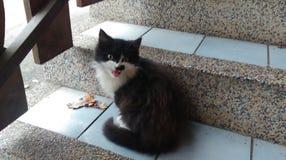 Cat Cupko. Happy Amazing Royalty Free Stock Photography