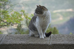 Cat on the curb Royalty Free Stock Photography