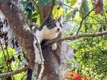 Cat Curiosity über, was voran ist stockfotografie