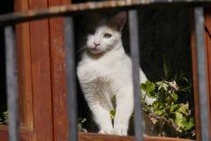 Cat curiosity stock image