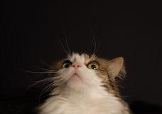 Cat Curious Stockfotos